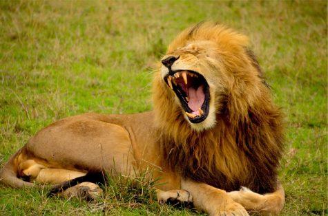 Lion's Voices: Valentine's Day